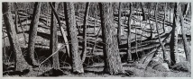 "Pennock Woods View, woodcut, 24"" x 60"", paper 32"" X 67"", 2018"