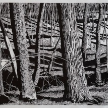 "Pennock Woods View, woodcut, 24"" x 60"", paper 34"" X 68"", 2018"