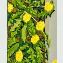 "Dandelion Border, reduction woodcut, Sekishu mounted on Rives BFK paper, 24"" x 6"", 2019"